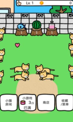 和猫咪一起玩